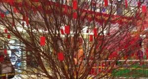 在商場看到大桃花,要順時針行還是逆時針?